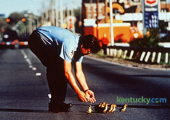 Lexington firefighter Don Barker helps a family of ducklings cross Richmond Rd. in front of Lexington Mall April 18, 1991. He was on the scene of an injury accident across from the mall when the ducklings started to cross. He and other firefighters and police officers held up traffic while they crossed.