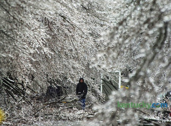 While waiting for his car to warm, Manuel Martinez Larumbe stands in the middle of Gatehouse Place, off Liberty Road, among the ice covered branches of Bradford Pear trees  Feb. 16, 2003 in Lexington during an ice storm which struck central  Kentucky overnight. Photo by David Stephenson, Herald-Leader staff