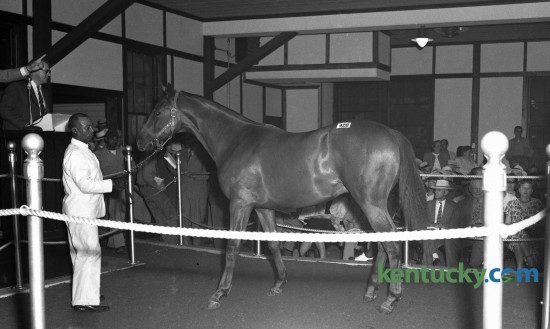 A chestnut colt by Coldstream was shown in the auction ring at the Keeneland Sales in August 1946. The colt was out of Spotted Beauty, she by Man o' War, was sold to Leslie Combs II for $50,000, the highest bid brought in at closing auction.  Consigned by Coldstream Stud.