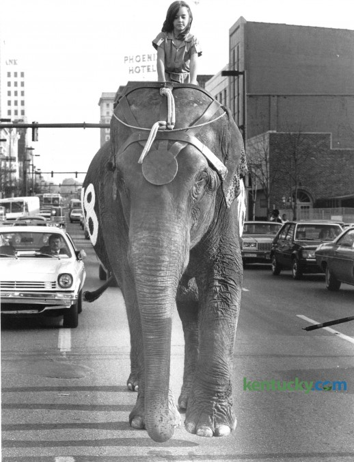 """The Clyde Beatty Cole Brothers Circus came to town in November of 1980. Anya Armes, 8, daughter of Mr. and Mrs. David H. Armes of Lexington rode """"Pete"""" the elephant down Main Street to Rupp Arena prior to the November 13 performance. The Ringling Bros. and Barnum & Bailey Circus is visiting Rupp Arena Sept. 5, 2014 - Sept. 7, 2014. Photo by David Perry 