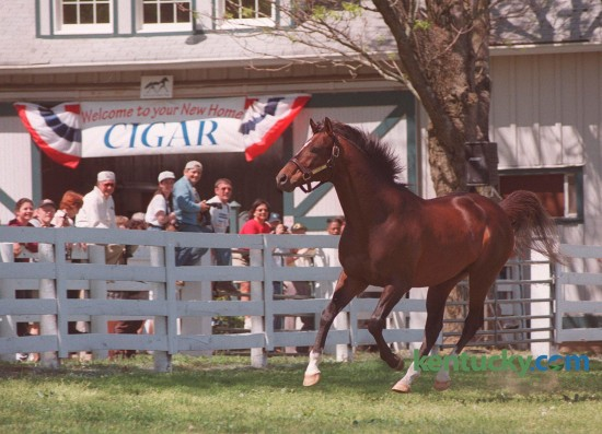 Cigar, the two-time Horse of the Year whose 16-race winning streak was among the top feats in racing history kicked up his heels after arriving at his new home, the  Kentucky Horse Park Sunday, May 2, 1999.  He was inducted into the National Museum of Racing and Hall of Fame in 2002, won 19-of-33 career starts and established an earnings record of $9,999,815. The Kentucky Horse Park announced yesterday that the 24 year-old  died Tuesday from complications following surgery.Photo by Frank Anderson | Staff