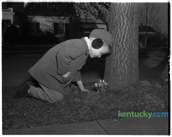 Charles Donald Henry, in earmuffs, looking at crocuses growing in neighbor's yard.  February 1949.