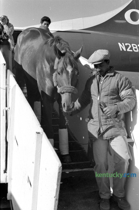 Secretariat arrives at Blue Grass Field Nov. 12, 1973 to stand stud at Claiborne Farm in Lexington. The Triple Crown winner was at Claiborne Farm until his death in 1989. Herald-Leader archive photo