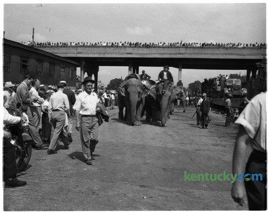 Ringling Brothers Barnum and Bailey Circus arrived in Lexington in July 1950. The elephants were unloaded from their train cars beneath Jefferson Street viaduct. Published in the Lexington Leader July 27, 1950. Herald-Leader Archive Photo