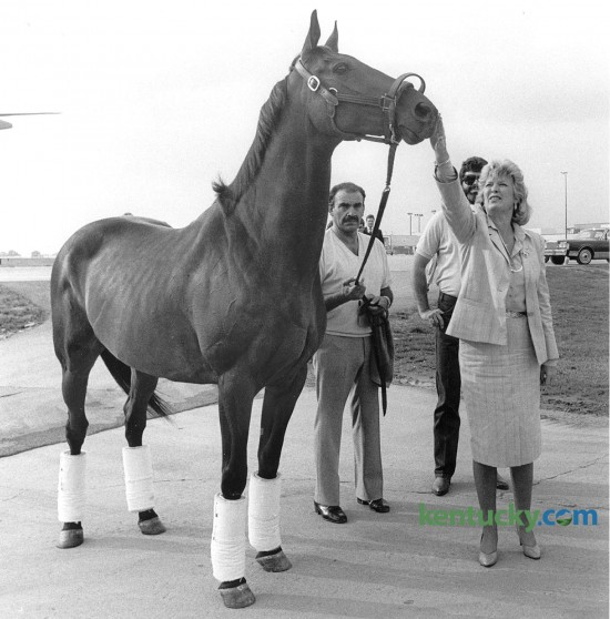 """Kentucky Governor Martha Layne Collins gives John Henry a rub on the head after the famous Thoroughbred race horse arrived in Lexington Aug. 26, 1985 at Blue Grass Field, now called Blue Grass Airport. The two-time Eclipse Horse of the Year winner was coming home to Lexington for his retirement at the Kentucky Horse Park. John Henry, a 10-year old gelding at the time of his retirement, was  taken to the Horse Park where waiting there was a shiny, new stall made of oak and brass in a barn named aptly enough """"The Hall of Champions."""" John Henry, the oldest horse to win a Grade 1 race - at age 9 - lived out his retirement for 22 years at the Horse Park. He was burried in front of the Hall of Champions at a spot in front of his paddock. Photo by Frank Anderson 