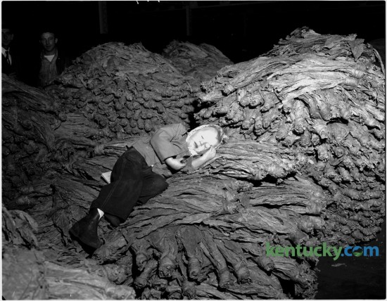 Joyce Ann Carroll took a nap on a basket of burley while waiting for her father's tobacco to be sold at a Lexington warehouse January 3, 1951. The second half of the 1950-51 Lexington looseleaf auction season begain in five local warehouses. Published in the Lexington Leader January 3, 1951. Herald-Leader Archive Photo