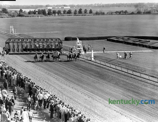 Start of the 35th running of the Blue Grass Stakes, April 23, 1959 at Keeneland in Lexington. Tomy Lee won the $32,550 race by a half a length. In the picture, the bay colt, who went off as the favorite, is the fourth horse from the rail. Nine days later, Bill Shoemaker and his English-bred mount won the Kentucky Derby, becoming only the second non-American bred horse to ever win the Run for the Roses. He did not run in the remaining two Triple Crown races because his trainer said he didn't like to run races too close together, so Tomy Lee went to California to rest. He died in 1971 and is buried at Pillar Stud in Lexington. Lexington Herald file photo