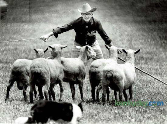 Candy, owned by George L. Conboy of Wanatah, Ind. penned several sheep during the Kentucky Stock Dog Association's Bluegrass National Open competition on Sunday June 10, 1979.  Each dog must pen its own sheep without help from the handler. Over 62 owners and their sheep dogs competed in the 20th annual meet at Walnut Hill Farm on Newtown Pike. The Bluegrass Classic Stockdog Trial runs through Sunday at the Kentucky Horse Park. Photo by Gary Landers | Staff