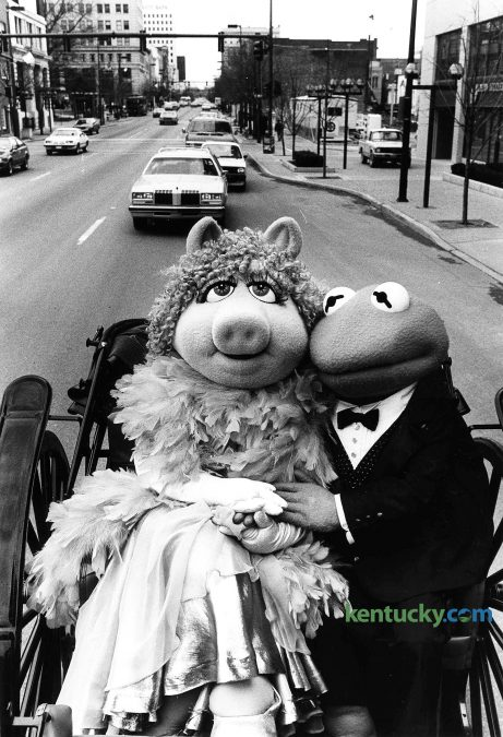 """""""Muppets"""" stars Miss Piggy and Kermit the Frog enjoyed a carriage ride down Main Street in downtown Lexington March 14, 1985. Their ride ended at Rupp Arena, where the Muppet Show was on stage five times over three straight days. Note in the background, above Kermit's head, construction was just getting underway for the Lexington Financial Center, aka, the """"Big Blue Building"""". Photo by Nick Nickerson 