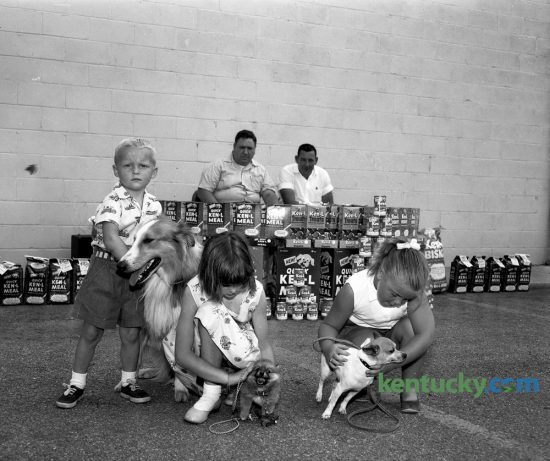 Owners of three dogs in a Kids Dog Show, held June 16, 1956 at Austin's Supermarket in the Meadowthorpe Shopping Center, worked with their pets before the big moment for judging arrived. They were, left to right, Stevie Penrod, 4, with Tinker Bell, a collie; Kathey Penrod, 7, with Penny, a pomeranian and Sally Adcock, 7, with Roughneck, a chihuahua. Judges in the background are Lawrence Sheets, a dog showman, and Kenneth Whalen with the Humane Society. The show was sponsored jointly by the supermarket and Quaker Oats Company. Herald-Leader Archive Photo