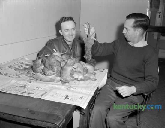A week before a county-wide effort to begin exterminating rats was to begin, in March 1947, W. J. Morris, left, and John J. Stillinger, of the Arnold Exterminator Company showed off 100 rats they killed in downtown Lexington businesses within 48 hours. The two men said they killed the rats with 1080, the most effective rat poison now on the market. Lexington officials acknowledged there was a rat problem and they were causing $500,000 worth of damage a year. The Fayette County Farm Bureau rat-extermination campaign was to take place March 14-15. Published in the Herald-Leader March 2, 1947. Herald-Leader Archive Photo