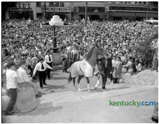 """Bess, """"the horse with the human mind,"""" led by trainer Joe Atkinson, mounted the steps of the Fayette County courthouse as a crowd of several thousand persons surged after him, filling the courthouse lawn and completely blocking Main Street. The milling mob so excited Bess that he had to be calmed before performing some of the tricks that had won him a widespread reputation. Bess was exhibited at the courthouse on Saturday September 14, 1946, after a parade down Main Street. In the center background, a newsreel cameraman, mounted on an automobile, photographed the crowd and the performance. Bess, who's real name was Harry, was a 7-year-old gelding and the star of the movie """"Gallant Bess"""" which was to have it's world premiere in Lexington the following week. Herald-Leader Archive Photo"""