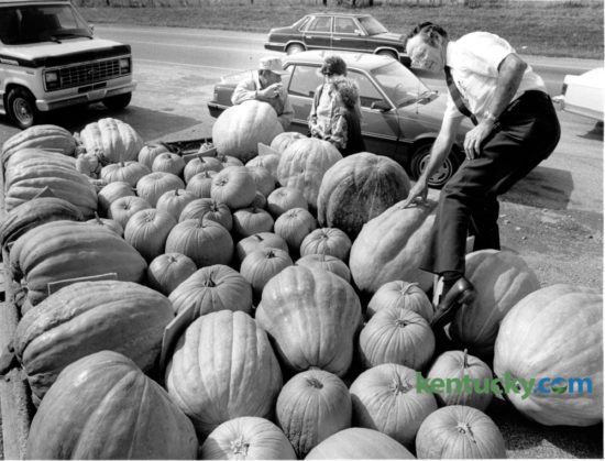 Jack Cains of Georgetown, climbed into a wagon of pumpkins at a roadside stand on US 27 north of Nicholasville to pick one for his daughter to carve into a jack-o-lantern on October 18, 1985. The pumpkins were grown by Hubert Caudill, background on the left, who was talking with Faye and Edith Collette. Caudill grew produce and pumpkins on his farm on Vince Road and sold them from the back of his farm wagon on Nicholasville Road.  Photo by David Perry | Staff