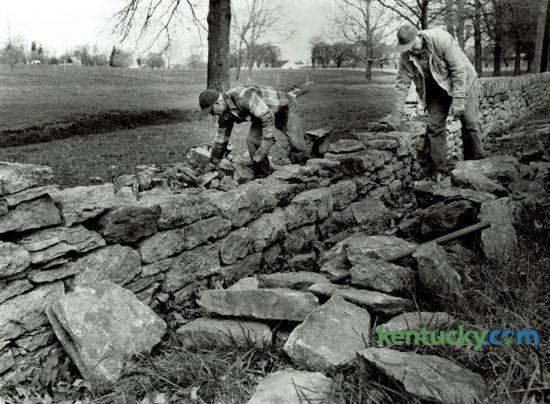 Ivan Baugh and Edgar Henderson repaired a stone wall on the University of Kentucky's Coldstream farm on Newton Pike in April 1976. A 24 foot section of the wall had been knocked down after being hit by car. Photo by Chela Richardson | Staff
